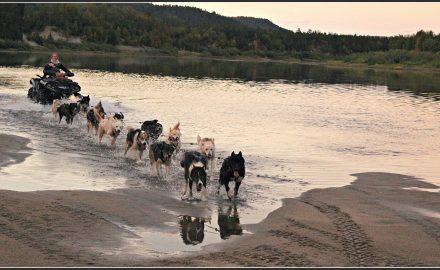 Sled dog training