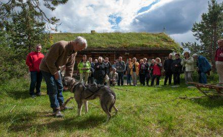 Visit Engholm Husky farm