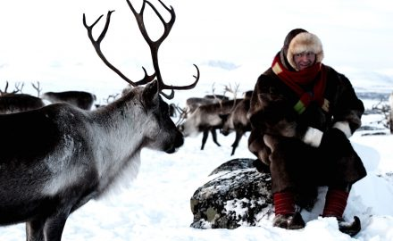 Visit Sami reindeer herder