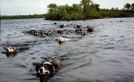 Summer dog camp on a island