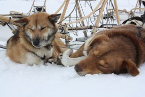 Tour_resting-dogs